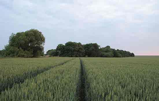 Naša poljoprivreda